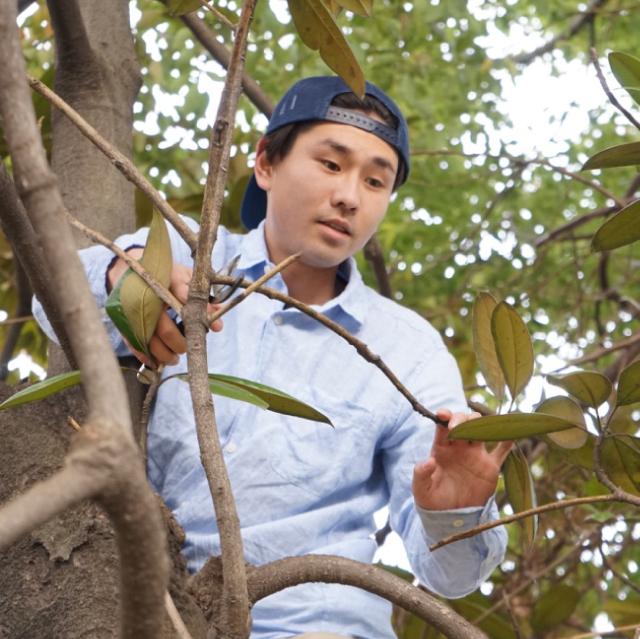 庭木のお手入れ・植木の剪定・伐採