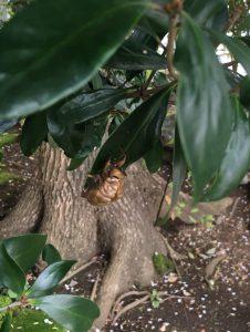 庭木の写真